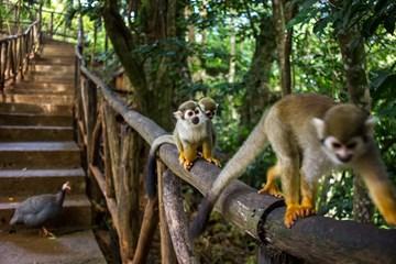 Travolon Monkey Jungle