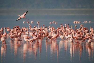 Travolon Flamingo's Laguna de Oviedo
